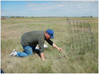 pasture grass research field