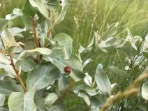 lady bug pasture Alberta Wainwright Edgerton prairie plain